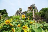 Vietnam Safari Park
