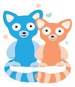 Lovers raccoons