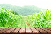 Empty Wooden Board Top Table In Front Of Blurred Corn Field Background. Perspective Wood In Blurred  poster