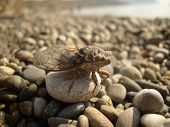 Insect. Cicada