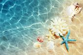 Seashell On The Summer Beach In Sea Water. Summer Background. Summer Time. poster