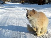 Ginger Cat Sitting On The Snow On Country Road. Stray Cat During A Snowfall, Winter Weather Concept poster