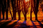 Silhouette Of Trees In Sunset. Trees At Sunset. Beautiful Spring Landscape In Latvia. Beautiful Land poster