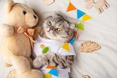 Cute Cat With A Teddy Bear, On A Light Background With Toys. Funny Animals, With Space For An Inscri poster