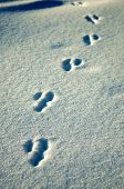 Animal Footprints poster