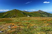 Grass And Green Hills