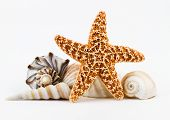 Seashells And A Starfish.