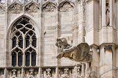 Een Gargoyle In de kathedraal van Milaan