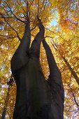 view of tree-top of broadleaved tree