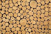 Texture Of Cut Timber Logs