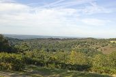 foto of punchbowl  - View from Hindhead common across the valley known as the Devil - JPG