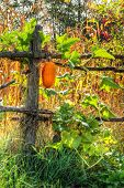 Autumn rural landscape