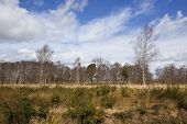 Birch Tree Heathland