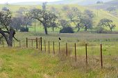 Blackbird Sitting On Barbed Wire Fence