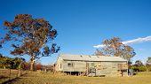 Ovinos de corte na Austrália Rural