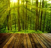 Wooden platform in pine tree forest, golden sunlight at Shimla during sunset, the capital city of Hi