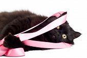 Black Cat Playing With Pink Ribbon