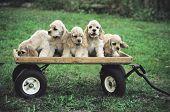 Acs In Wagon