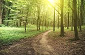picture of sun flare  - Beautiful nature at morning in the misty spring forest with sun rays - JPG