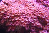 Anemone     Save to a lightbox ?          find similar images    share share ?    Anemone
