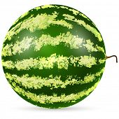 Ripe watermelon isolated on white background vector illustration.