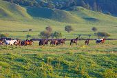 Herd of horses on a summer pasture