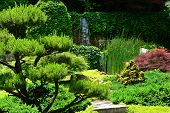 stock photo of juniper-tree  - Beautiful manicured Japanese garden with mature Japanese Maple trees and Junipers - JPG