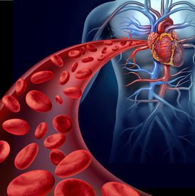 picture of cardiovascular  - Heart blood health with red cells flowing through three dimensional veins from the human circulatory system representing a medical health care symbol of cardiology and cardiovascular fitness - JPG