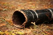 picture of didgeridoo  - Old black with wite stripes didgeridoo lying on the ground - JPG