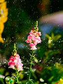 Flower And Sprinkler