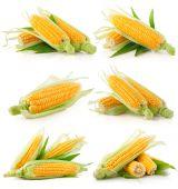 Conjunto de vegetales de maíz fresco con hojas verdes