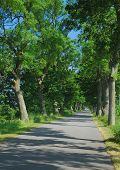 Tree lined Road,Rugen island,Germany