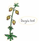 Isolated Wild Flower. Floral Vector Background.