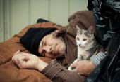 stock photo of tarp  - Closeup portrait of a homeless older man sleeping under a plastic tarp on the street with a friendly stray kitten - JPG