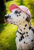 Dog With A Cap
