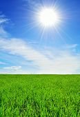 Sun, Sky And Green Field