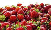 Strawberries Tumbling, Close Up.