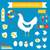 Chicken and eggs infographic set