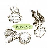 stock photo of kohlrabi  - Kohlraby - JPG