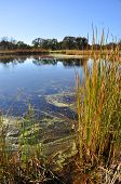 California Wetland