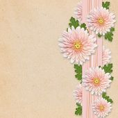 Aster Flowers On Pink Background