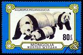 Vintage  Postage Stamp. Family Pandas.