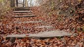 Wood Stairs Path Through Fall Colored Trees