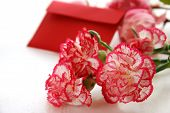 carnation flowers with card