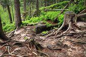 Mountain trail in Table Mountains, Poland