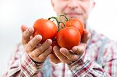 Farmer's Organic Fresh Tomatoes