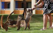Badgers in a mexican garden
