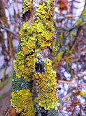 picture of wart  - Extremly beautiful wart on the tree - JPG