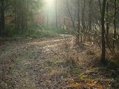 Sunny Forest Road, South Bohemia