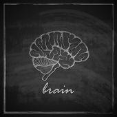 vintage vector illustration of human brain on blackboard background